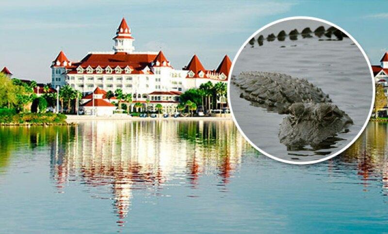 Un niño se encuentra desaparecido en el hotel Floridian de Disney World en Orlando, después de que un cocodrilo se lo arrebatara a sus papás.