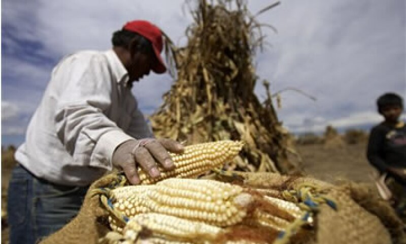 En 2011, México produjo 19.2 millones de toneladas de maíz.  (Foto: AP)