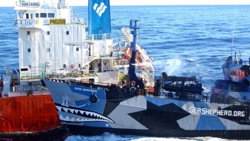 ballenas, caza, japon, sea shepherd, oceano, austral