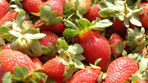 Fresas campo