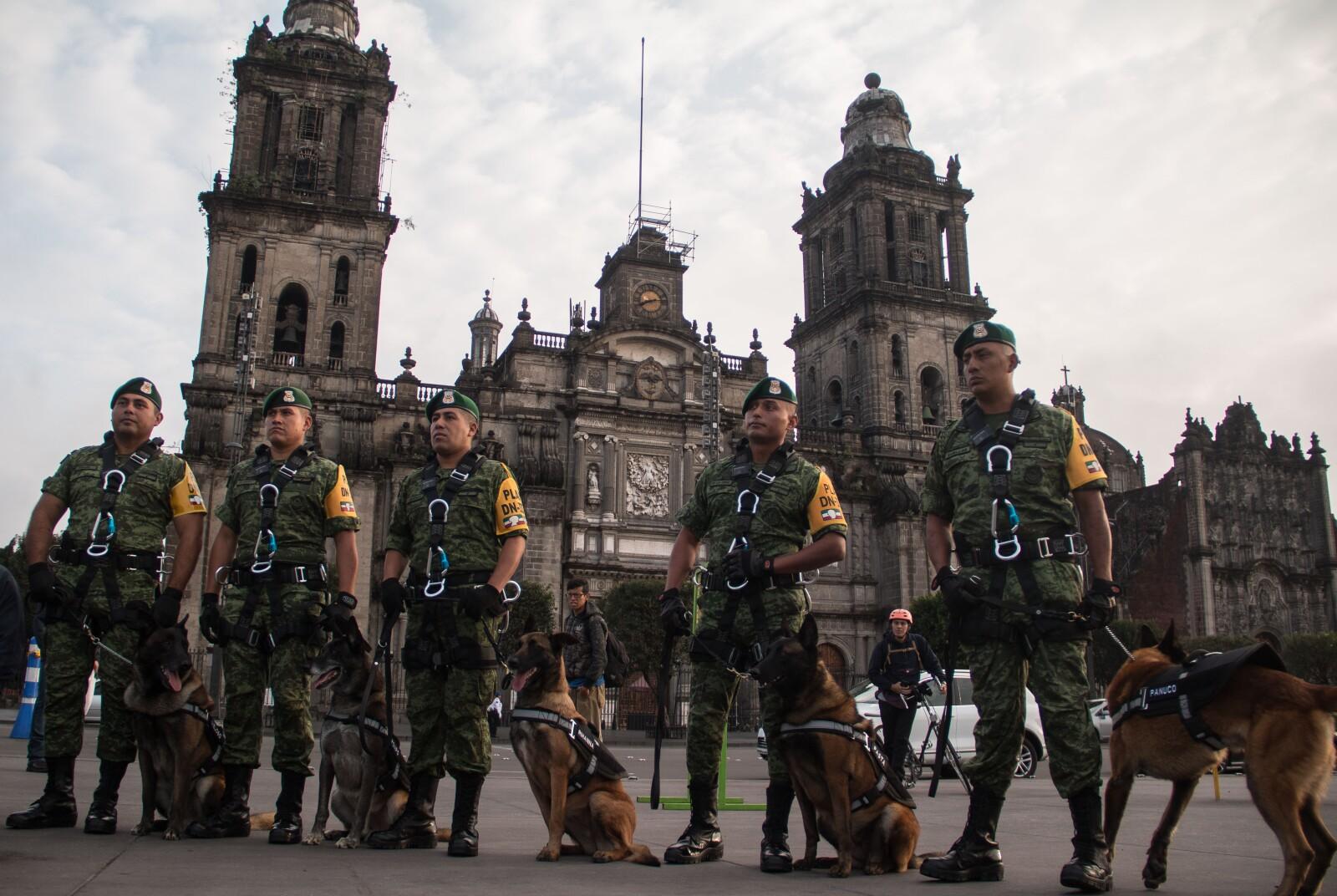 perros rescatistas