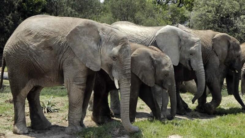 elefantes_puebla