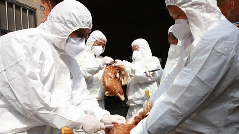 gripe aviar h7n9