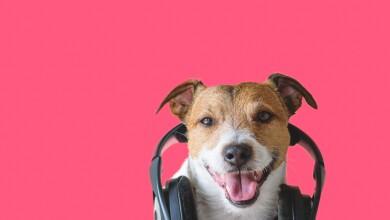 Música para tus mascotas