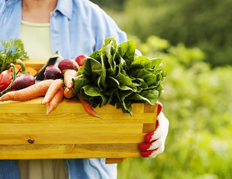La comida orgánica son aquellos alimentos que no están expuestos, entre otras cosas, a pesticidas y fertilizantes.