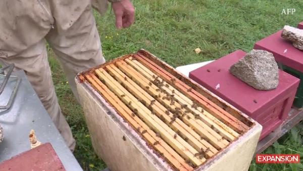 Francia prohíbe cinco pesticidas para proteger a las abejas
