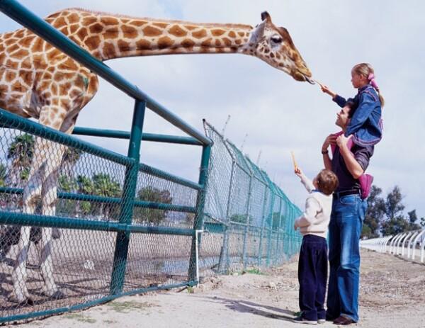 El veterinario le dijo a la revista Quién que en 2006 tenía en el zoológico cerca de 54 especies de mamíferos.