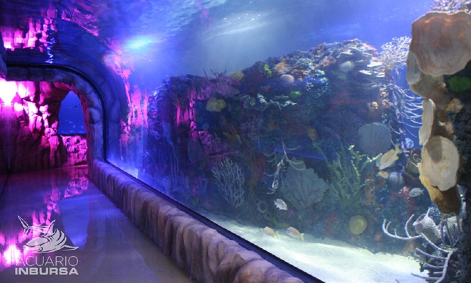 Con el acuario se busca generar conciencia sobre el grave deterioro que existe en los ecosistemas marinos.