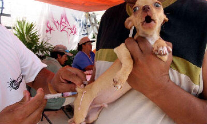 perro casero vacunaci�n