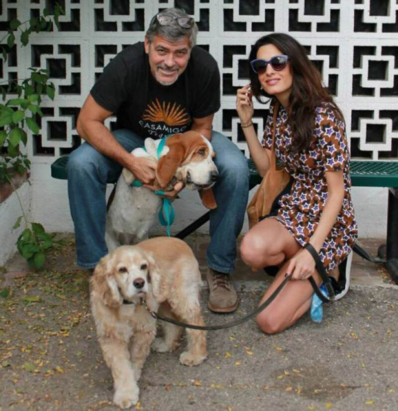 Según fuentes cercanas a los esposos, George está al pendiente de la alimentación de Amal, con quien recientemente adoptó un perrito. ¿Será para su bebé?
