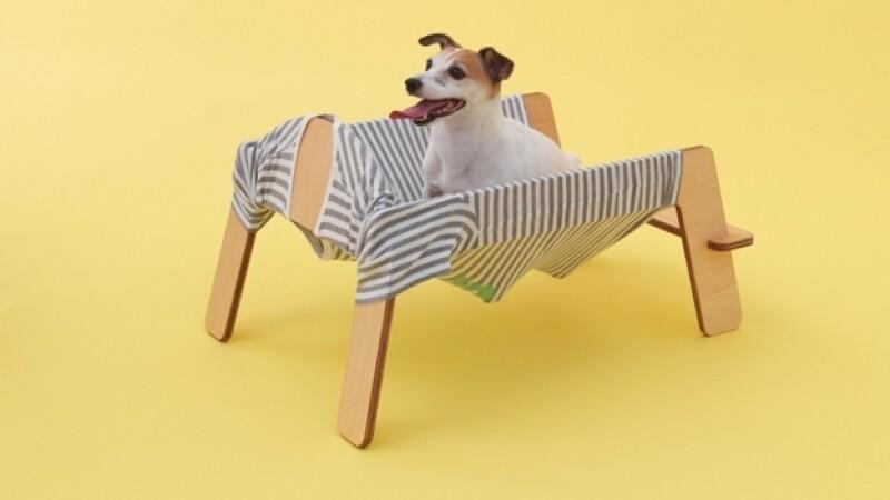 arquitectura perro12