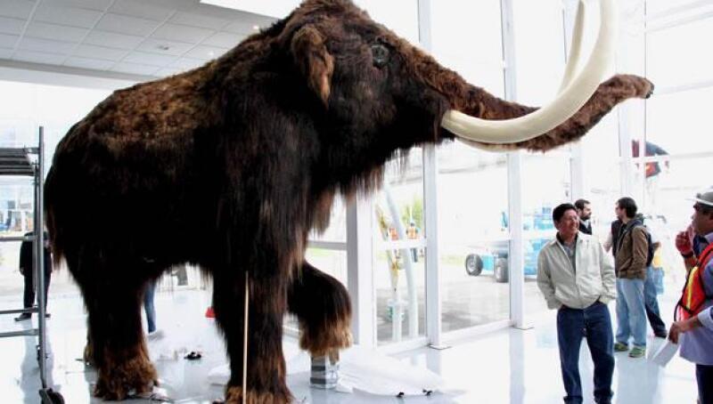 expo bicentenario mamut