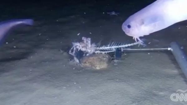 Una exploración halla lo que podría ser tres nuevas especies de peces