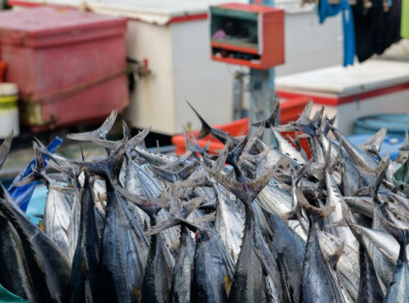 pesca de at�n