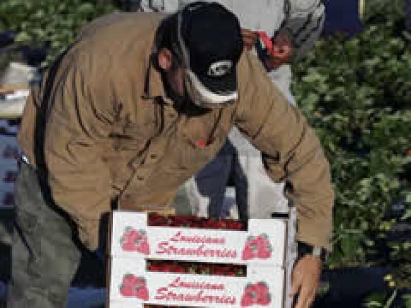 Las fresas entre los productos a los que se les subirá el arancel. (Foto: AP)