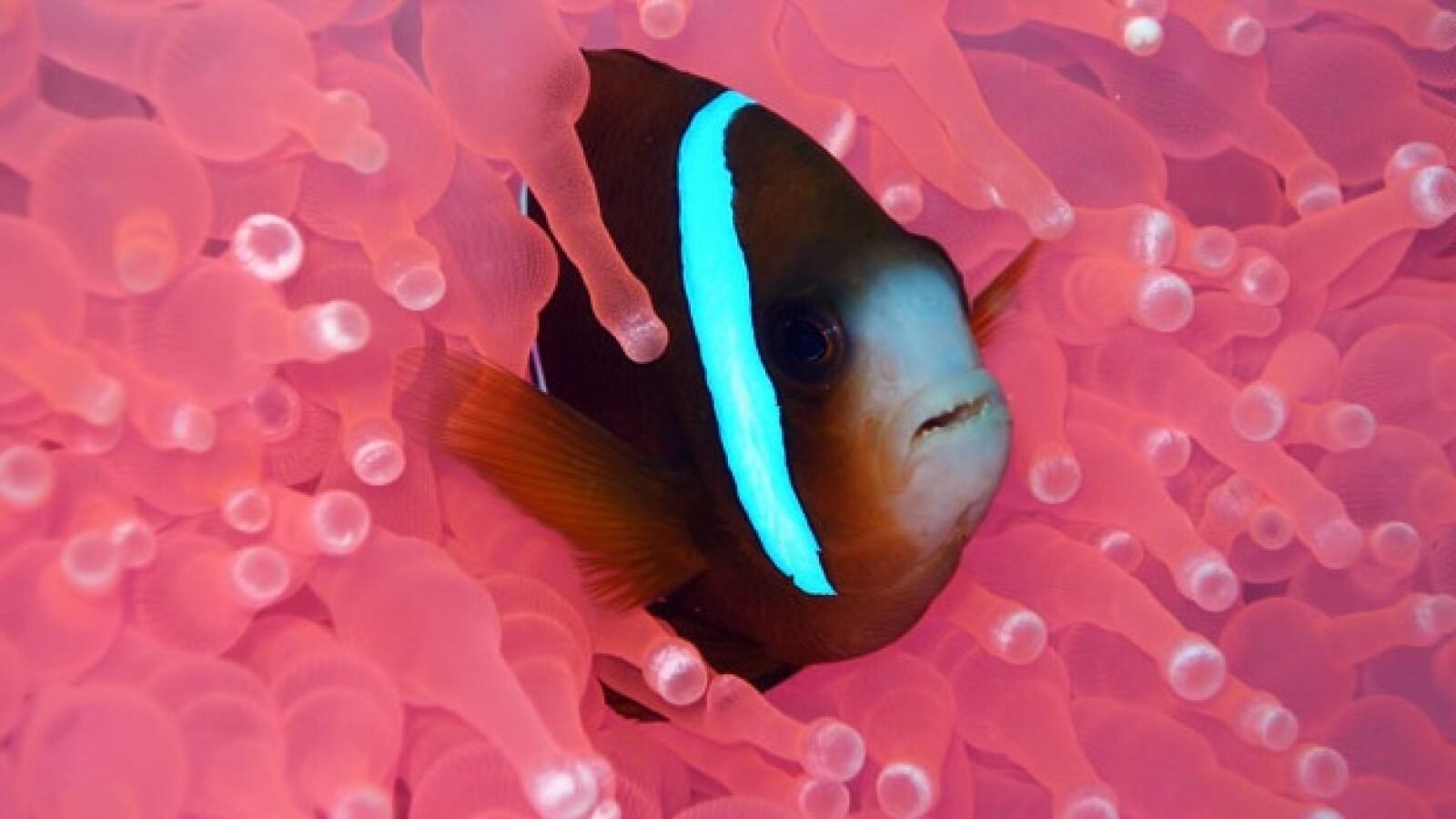 arrecife coral peces 04