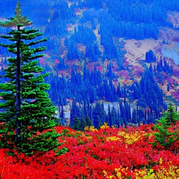 Mountain Glory