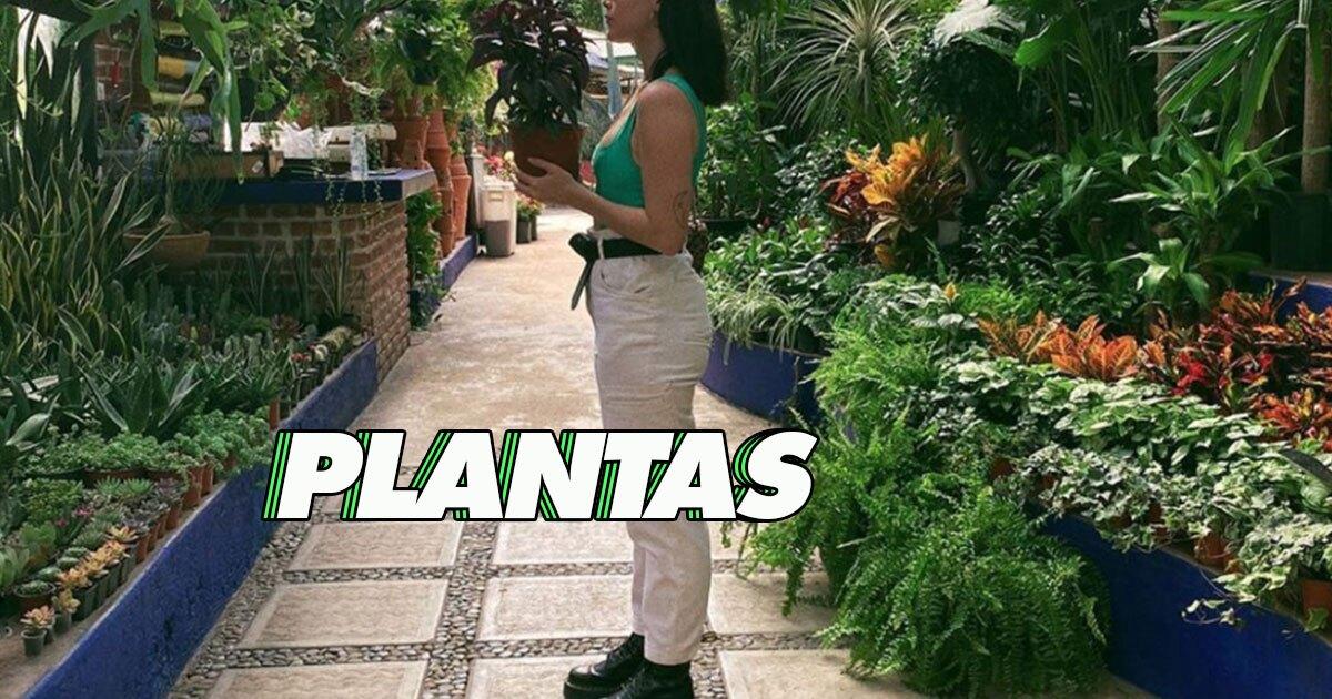 8 cosas que aprendí para cuidar y mantener mis plantas