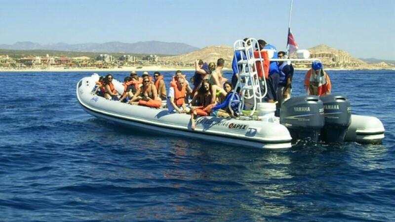 ballena accidente mata a turista