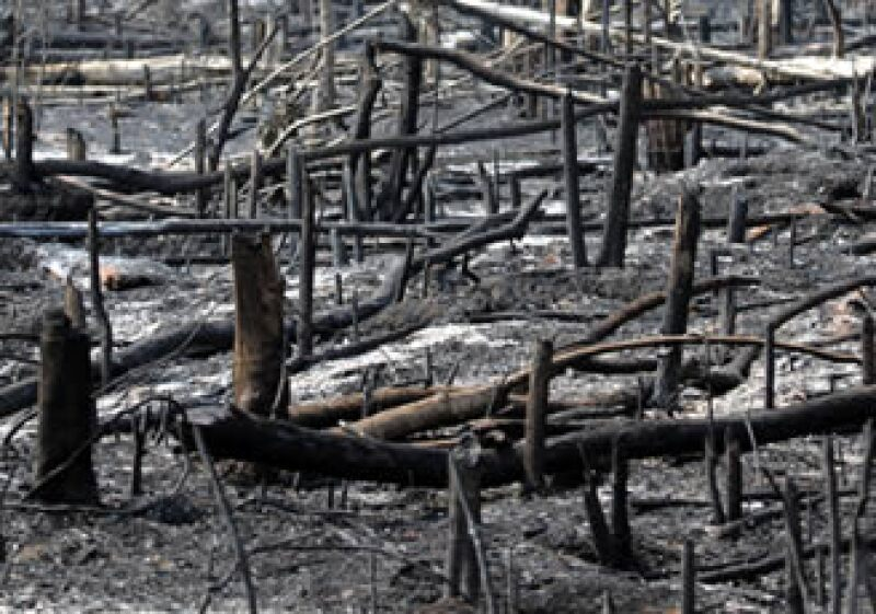 En las últimas décadas se han destruido 857,000 km2 de la selva amazónica, la misma superficie de Francia e Inglaterra juntas. (Foto: AP)
