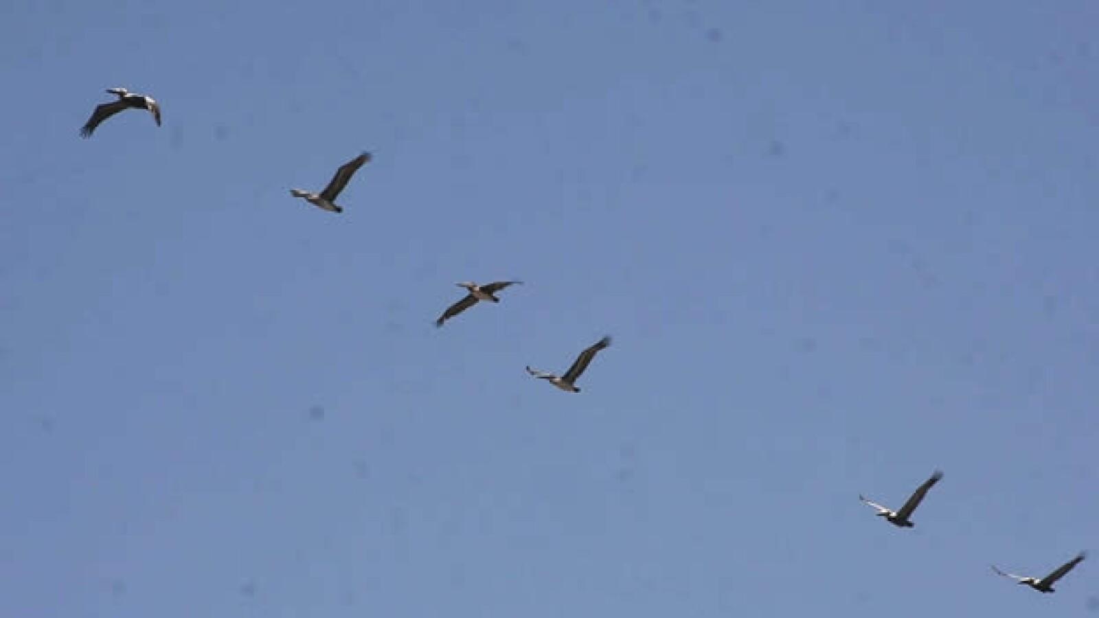 aves y humedales veracruz 14