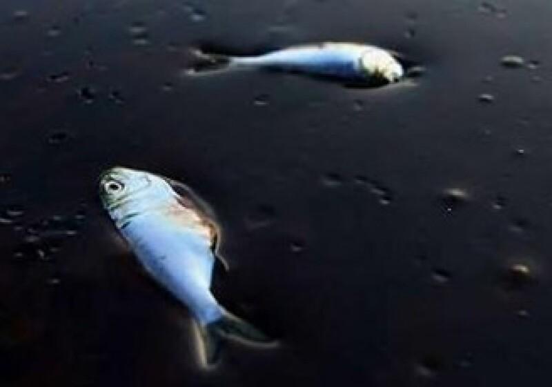 El accidente de BP en el Golfo había sido antecedido por una explosión que la empresa ocultó. (Foto: Reuters)