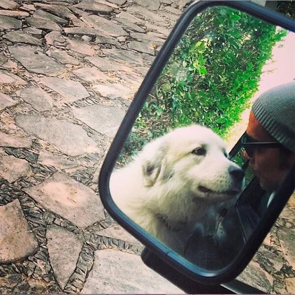 Sus perros son fieles al intérprete.