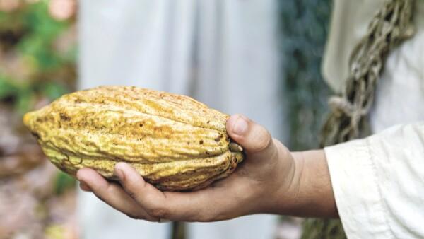 El estado ofrece rutas para visitar plantaciones y fábricas para conocer el origen y el proceso de transformación del grano de cacao.