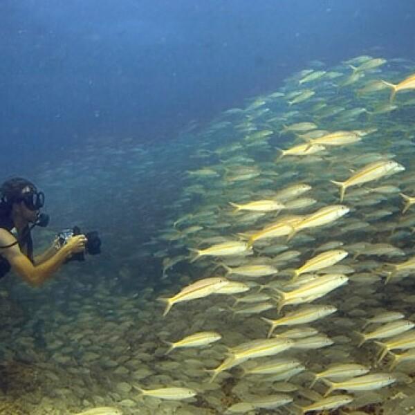 arrecife coral peces 01
