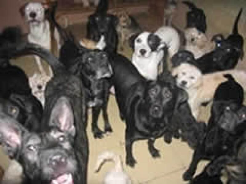 Algunos de los perros del rescatista, antes del ataque. (Foto: Especial)