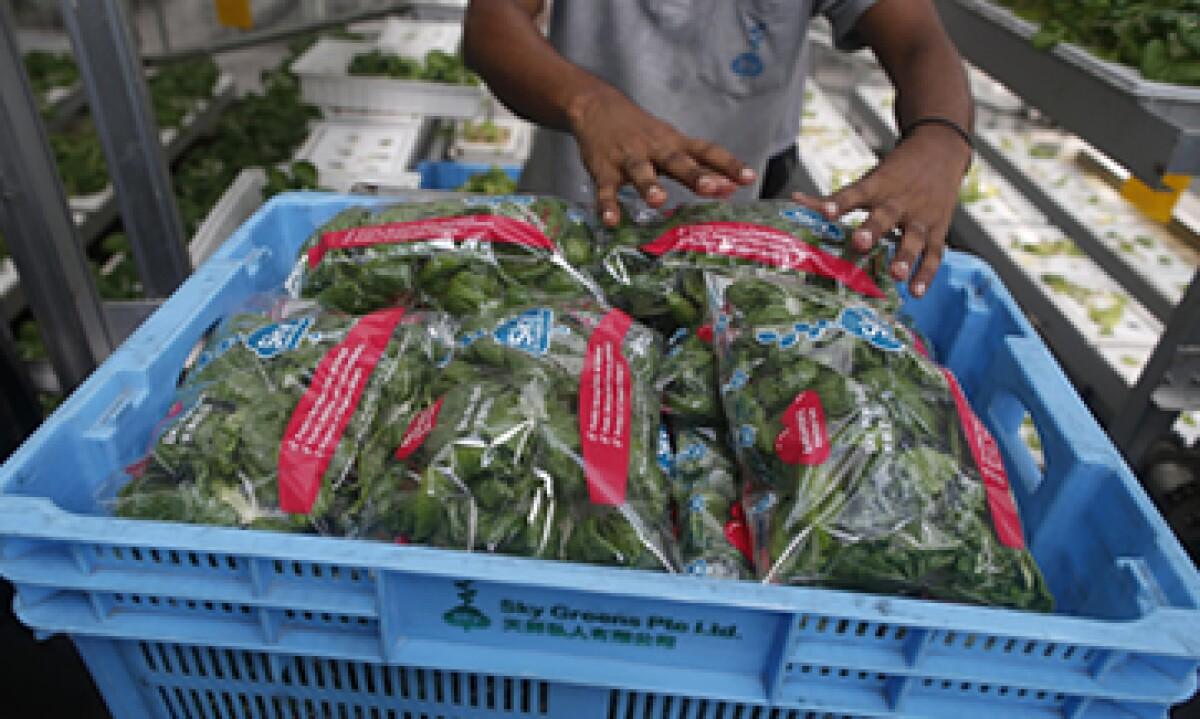 El nuevo giro de Panasonic: vegetales
