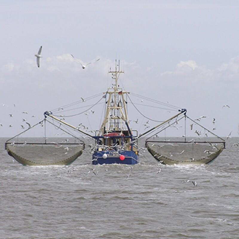 LOG-barco pesquero