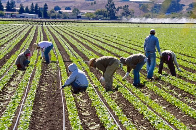 Trabajadores sin estatus legal.