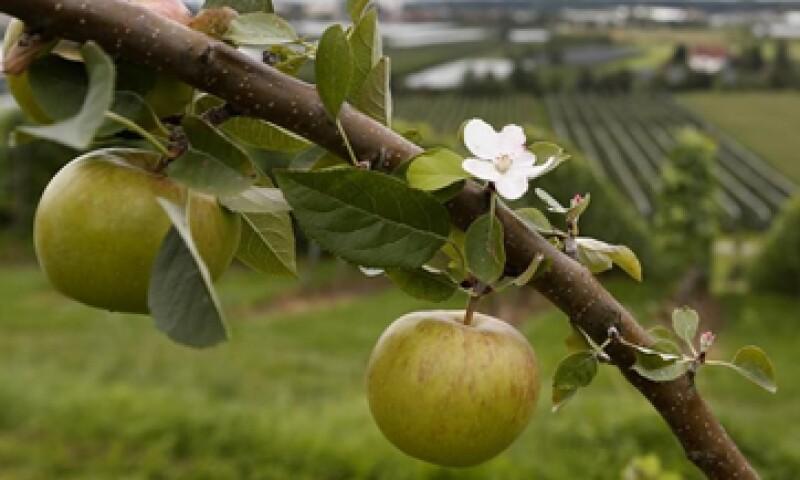 manzanas eu