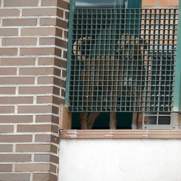 Excálibur perro protestas 2