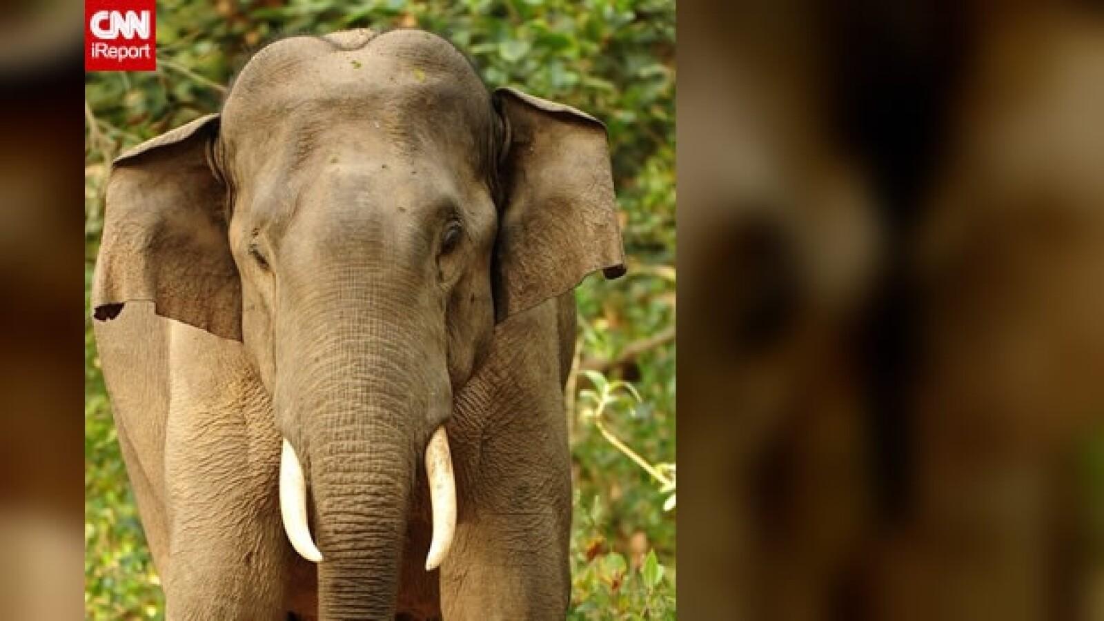 irpt-elefantes-india4
