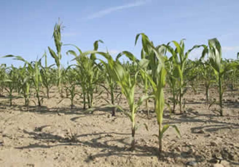 El país se debe enfocar en los rubros en donde existe una mayor necesidad de la población, como en la agricultura, señalan expertos. (Foto: Photos to go)