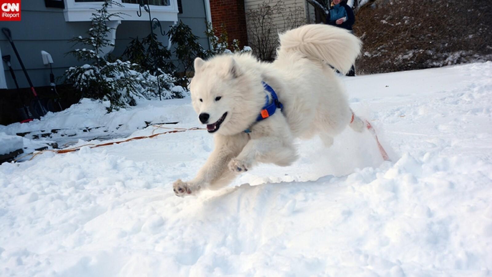 ireport mascotas nieve EU 04