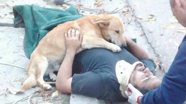Fidelidad canina