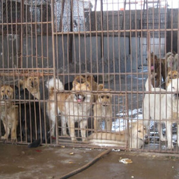 carne china perros gatos