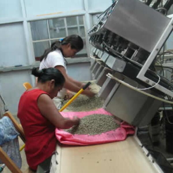 El café es seleccionado por mujeres de la zona.