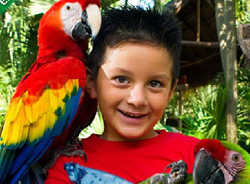 La guacamaya roja actualmente existe de forma natural en la Selva lacandona y otras partes de Chiapas. (Foto: Cortesía Xcaret)