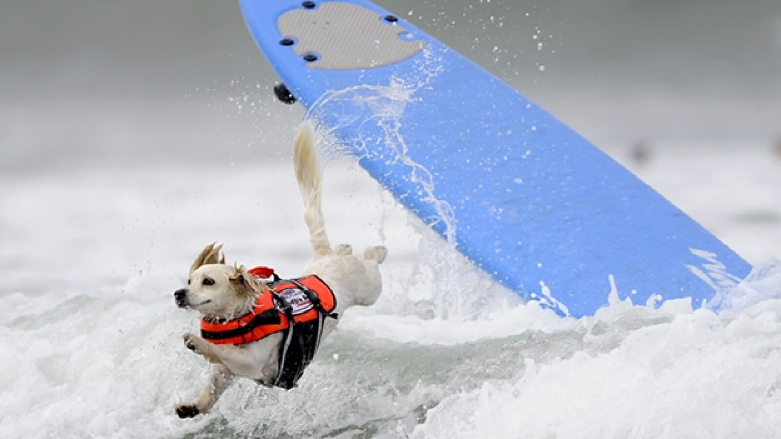 Surf Perros