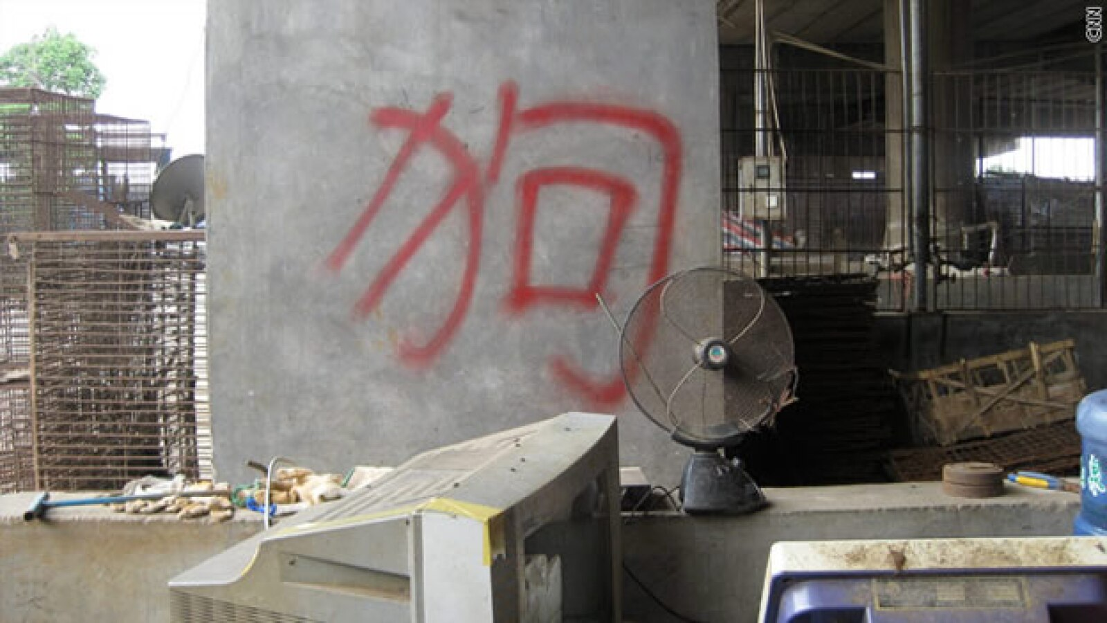 perros gatos china carne prohibición