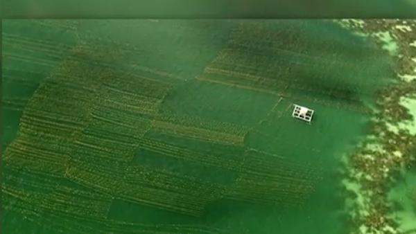 Las razones por las que las algas se perfilan como el alimento del futuro
