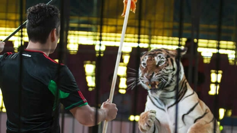 Ley contra el uso de animales en circos