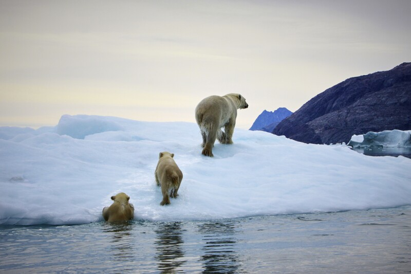 Calentamiento global - Derretimiento de polos - deshielo