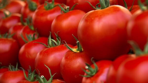 Campos de tomate (arancel