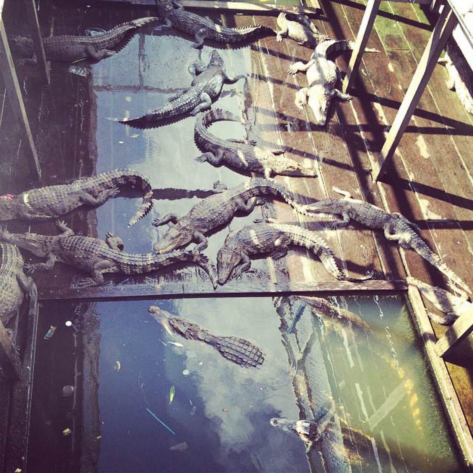Criadero de cocodrilos en Camboya.