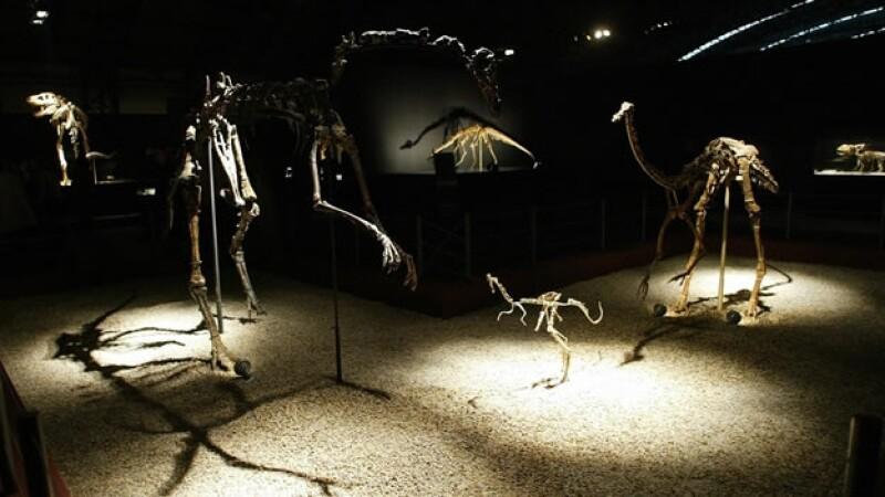 exposicion de dinosaurios